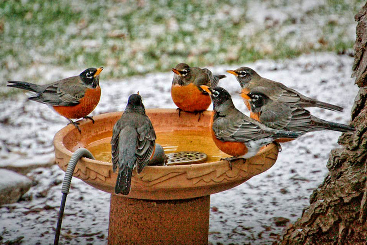 Summer and Thirsty Birds